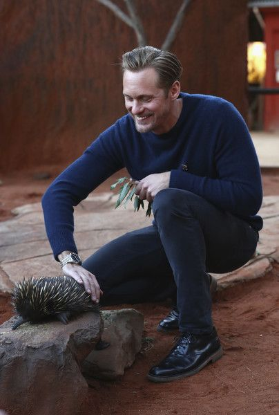 Alexander Skarsgard Photos - Actor Alexander Skarsgard pats an Echidna during the Legend of Tarzan Photo Call at WILD LIFE Sydney Zoo on June 14, 2016 in Sydney, Australia. - 'The Legend of Tarzan' Alexander Skarsgard Photo Call