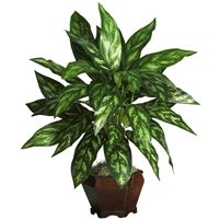 Silver King w/Wood Vase Silk Plant #6617 Create a regal environment in your home or office with this lovely silk Silver King. Slender stems adorned with glossy decoratively patterned leaves make this silk plant an ornamental delight.