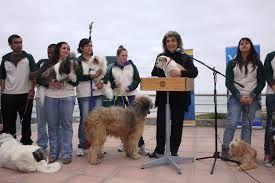 Resultado de imagen para premiaciones carreras de perros