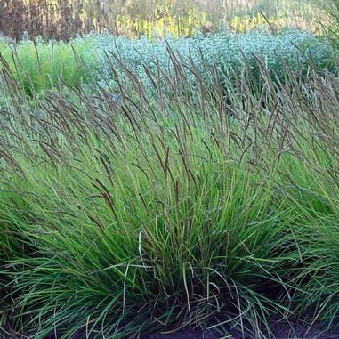 De 312 bedste billeder fra grasses and bamboo p pinterest for 747 evergreen terrace