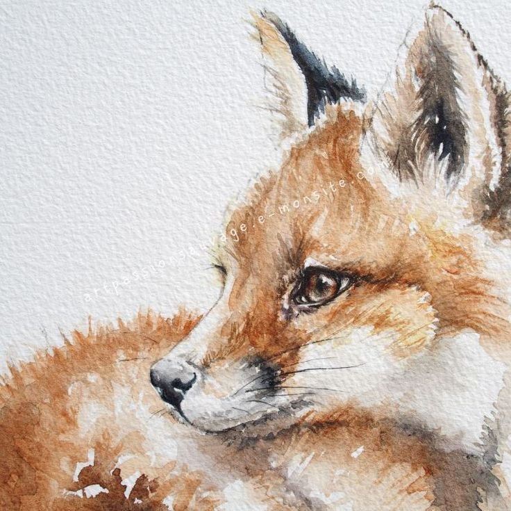 Aquarell Fuchs Details Watercolor Fox Animal Drawings Animal