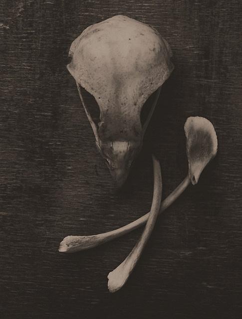 Bird Bones by thorburn, via Flickr