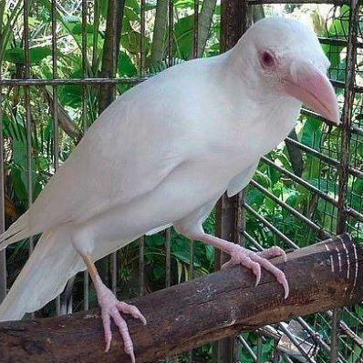 A-Z Liste von 125 seltenen Albinotieren #albinoanimals Krähe | A-Z Liste von 125 …, #Albino #albi …