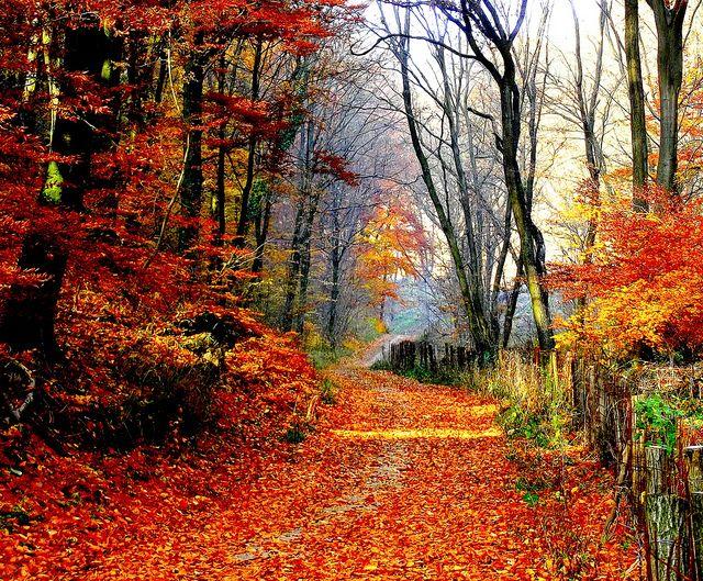Autumn Tale by G.Tamás, via Flickr