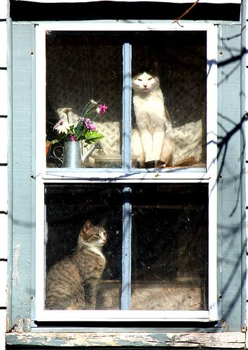 cats in the window: Windowcat, Kitty Cat, Sunny Window, Window Dresses, Window Cat, Upstairs Downstairs, Cat House, Window Seats, Kittycat