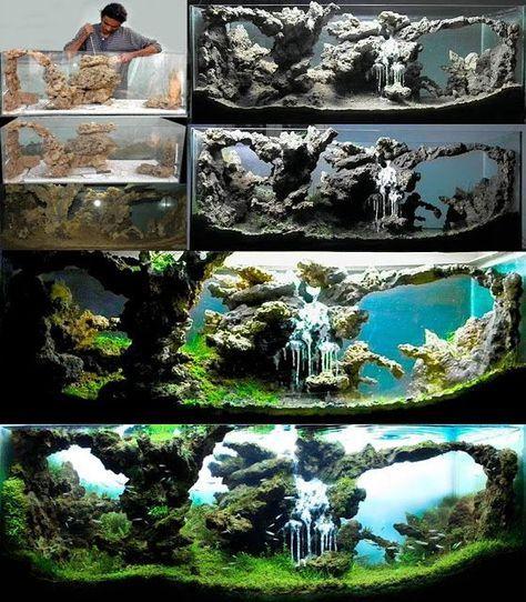 Les 25 meilleures id es de la cat gorie aquarium poisson for Petit aquarium original