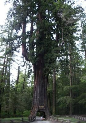 ★♥★ weirdest tree #picture - A #road ... but only one car at a time  please  ★♥★ #photo d'arbre étrange - une #route ... mais une seule  voiture à la fois s.v.p.  #humanoid #tree #Arbre #humanoide #trees  #Arbres #nature #beaute #beauty #life #vie #bizarre #weird #unusual