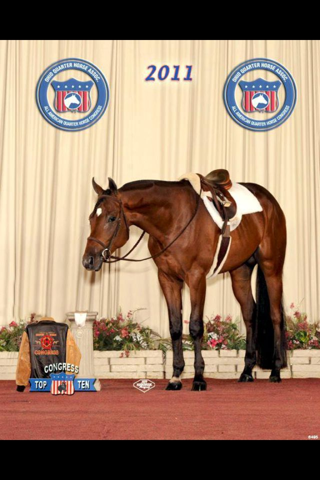 Barrel Racing Quarter Horse Congress Barrel Racing