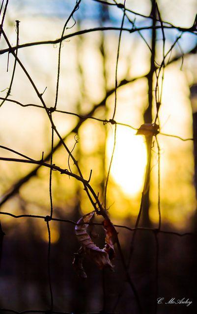 колючая проволока на фото | Красивые фотографии | FotoFlickr.ru