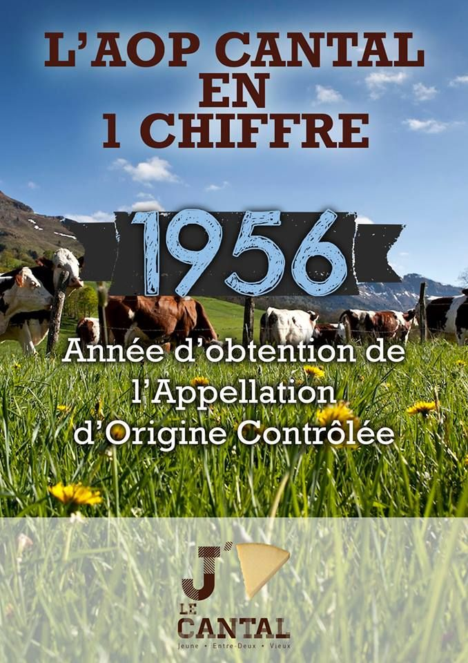 L'AOP Cantal en 1 chiffre : 1956, année d'obtention de l'Appellation d'Origine Contrôlée