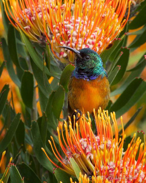 Birds Sunbird: Explored #248 October 9, 2010 By