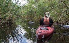 Everglades Nationalpark Kajaktour Guide Regis