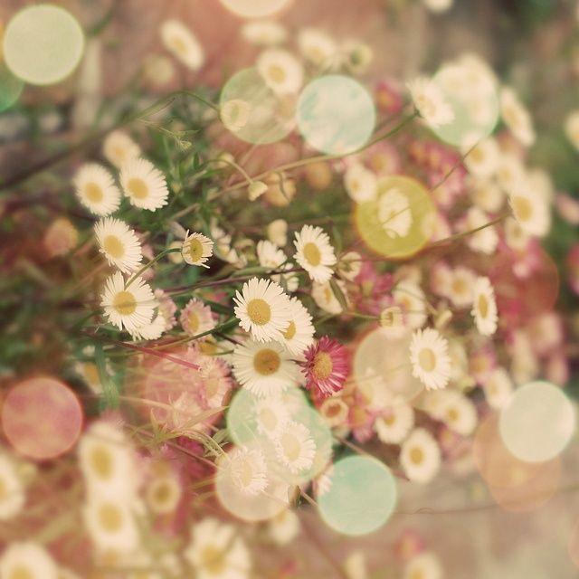 Daisies, memories of summer.