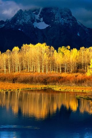 quaking aspen iphone wallpaper magnificent views