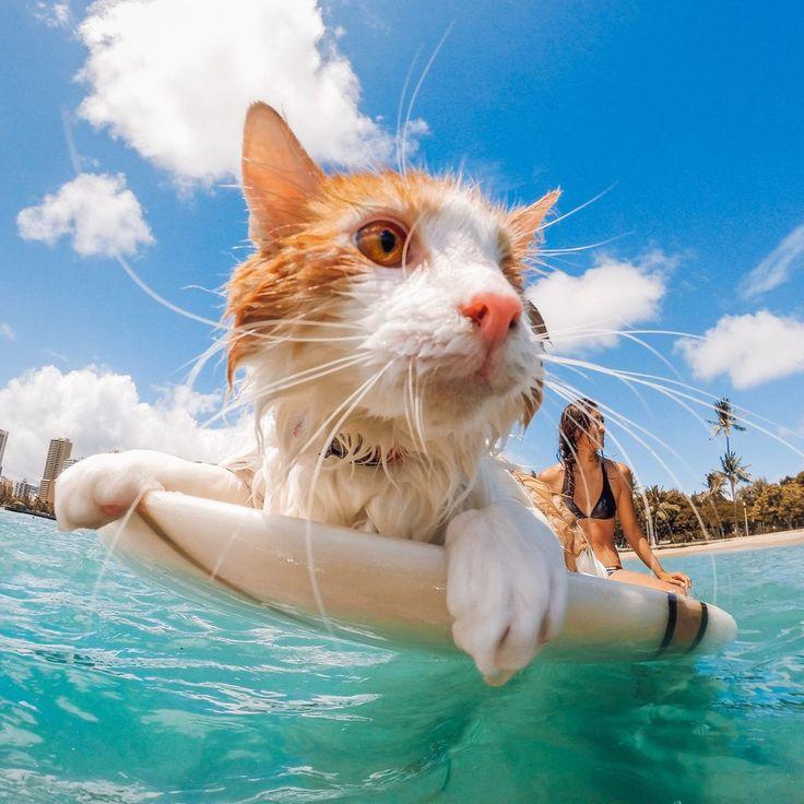 диспансер кошка отдыхает картинки прикольные несчастных случаев заболеваний