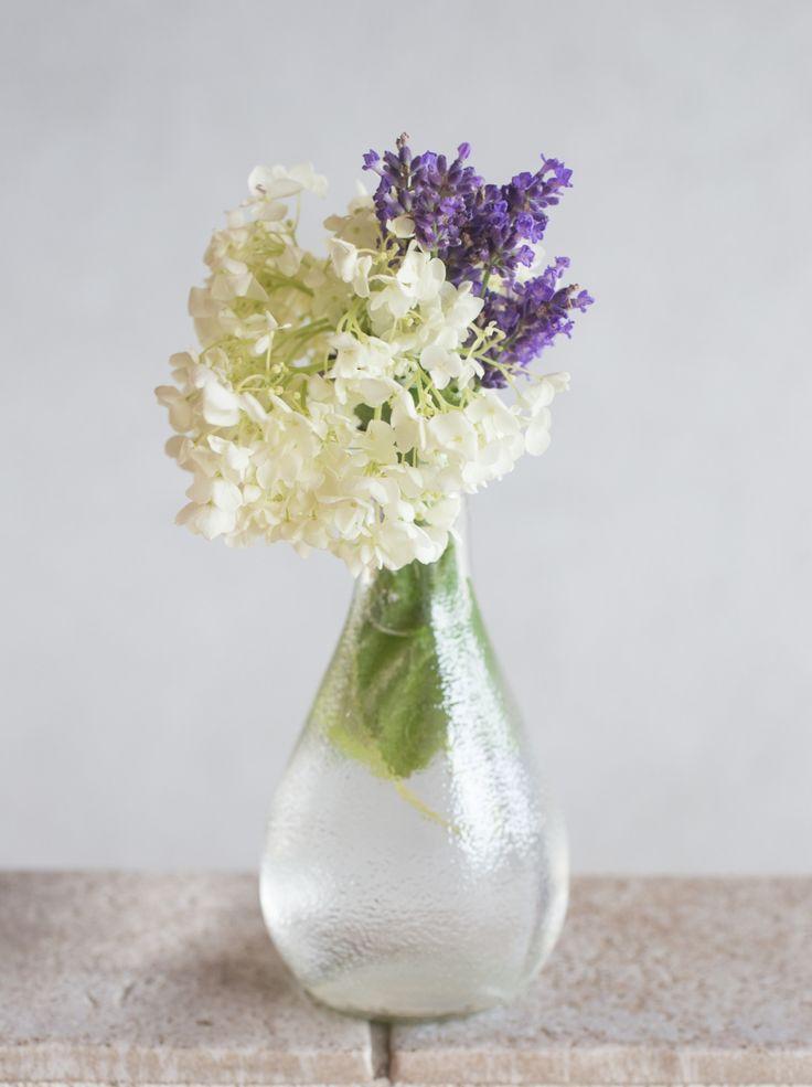 Hortensie-Lavendel