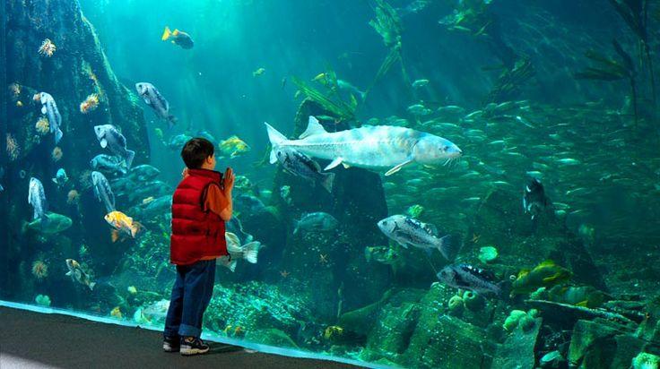 The Vancouver Aquarium.