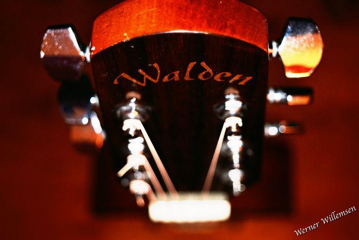 Walden Guitar