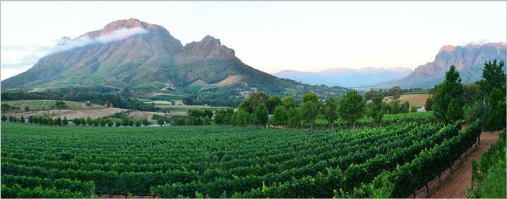 The Cape winelands are yours to explore.