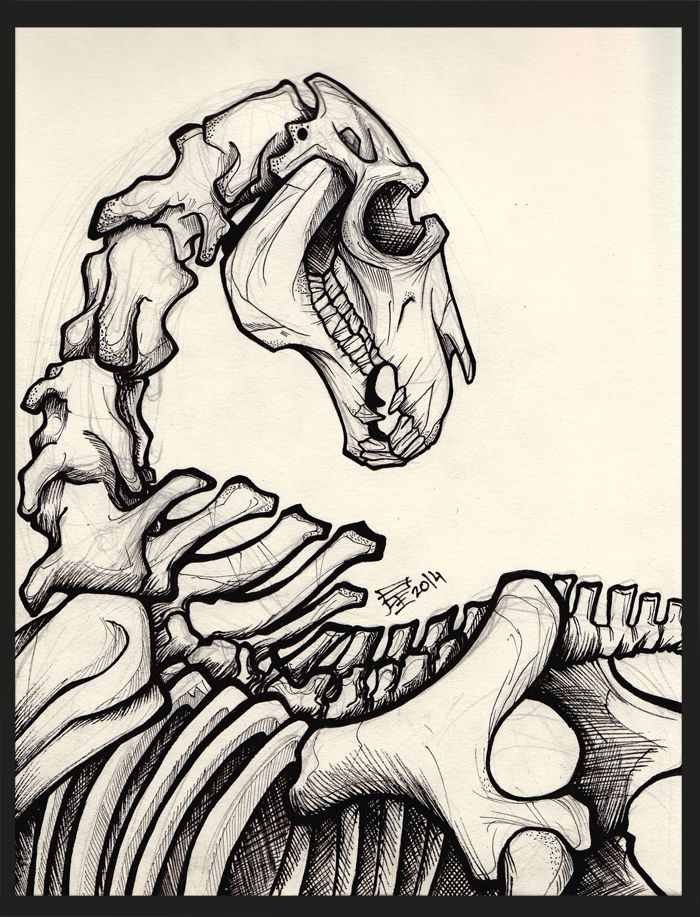 Dead Horse skeleton  done with various pens- Faber-Castell ecco pigment 0.1-0.4 Pigma Micron 005-0.8