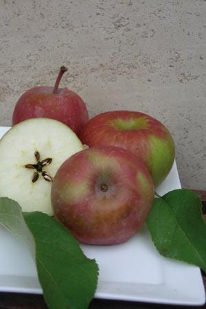 Diggers Club - Dwarf Apple Rome Beauty