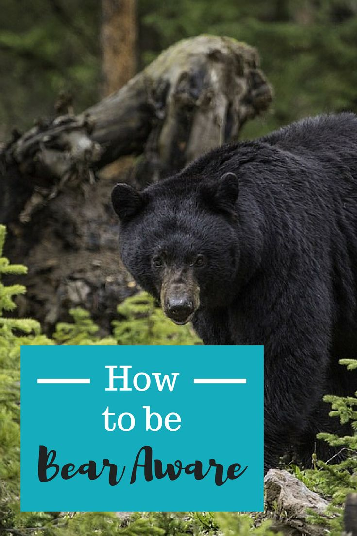One of the most common questions, and fears, I hear about the Appalachian Trail from hiker and nonhikers alike is - what if a black bear attacks??