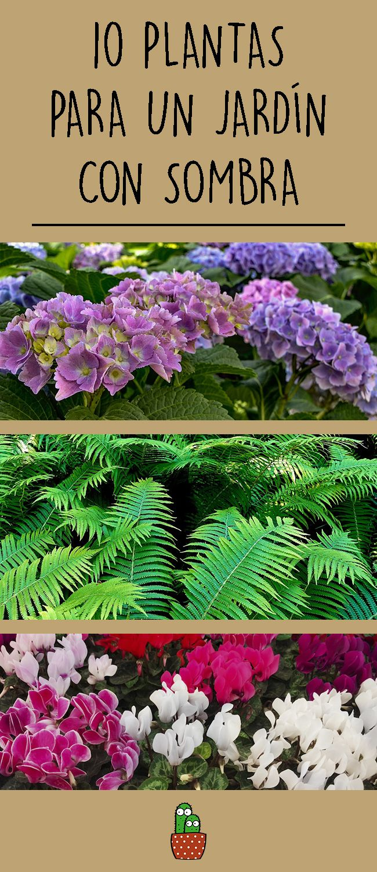 plantas para un jardín con sombra | plantas de sombra