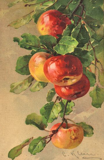 Art- Catherine Klein, (German watercolor artist,1861-1929), Vintage Apples illustration. #fall #autumn #apple
