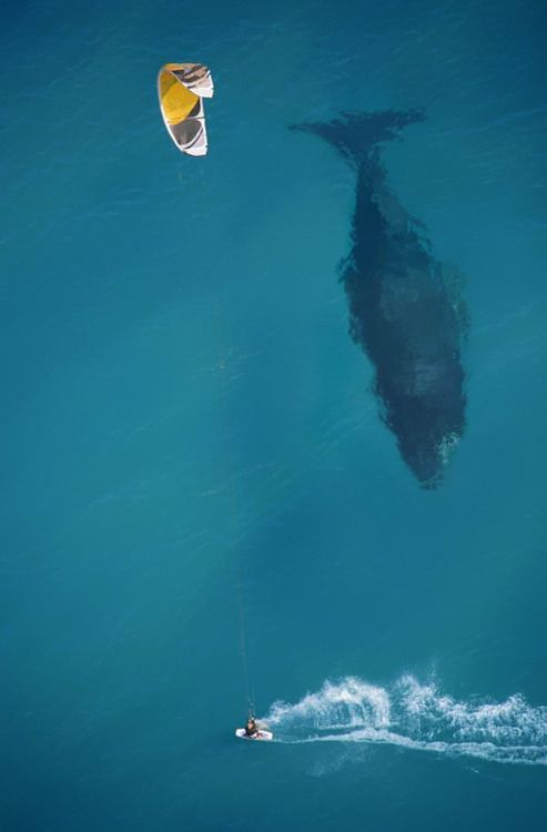 Whale Surf: Amazing, Picture, Photos, Animals, Nature, Kite, Sea, Photography, Whales