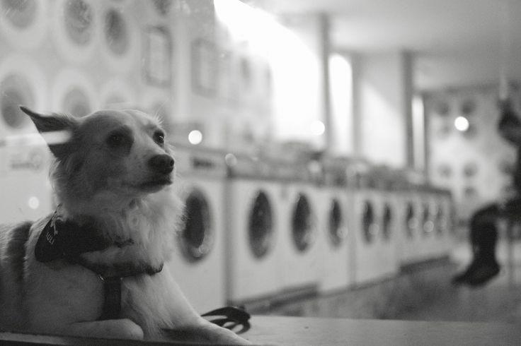 washwaiting by zibi t on 500px