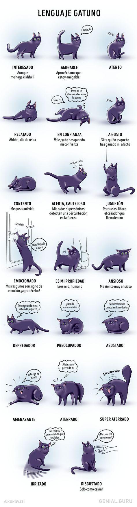 Breve diccionario del comportamiento felino