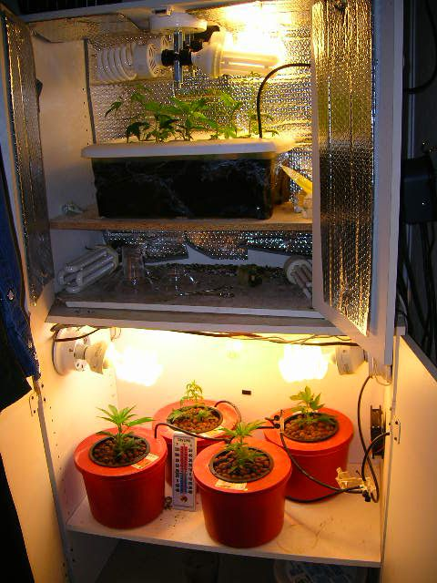 The Stealth Grow Cabinet Is The Easiest Way To Grow In