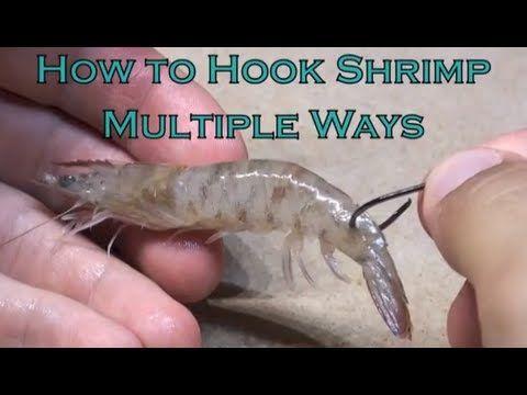 How To Hook Shrimp Like A Fishing Pro (VIDEO)