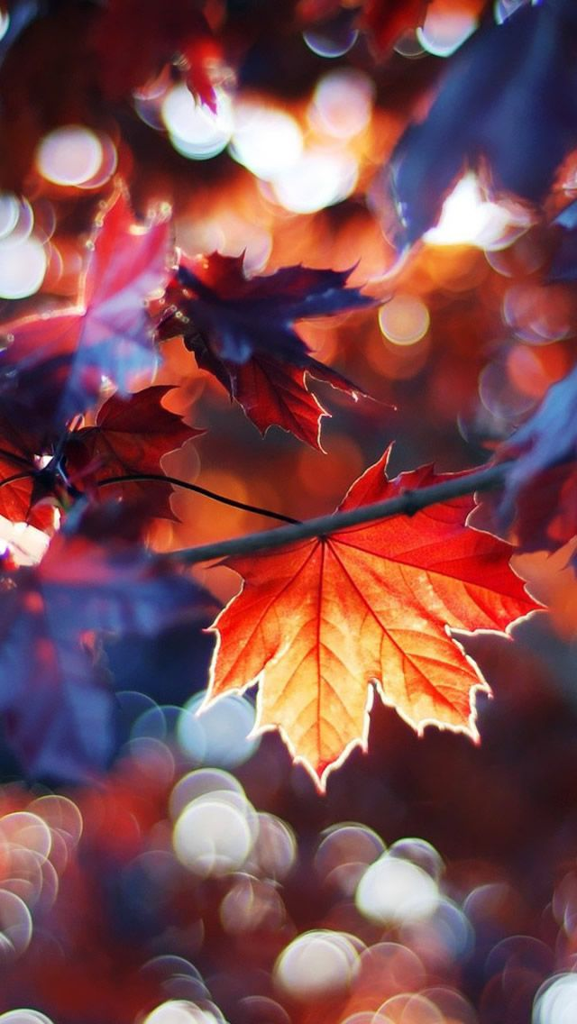 Autumn Leaves iPhone 5s Wallpaper Download | iPhone Wallpapers, iPad wallpapers One-stop Download