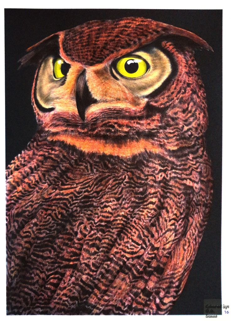 Tim Jeffs -  Intricate Ink Animals in Details volume 1   Great Horned Owl 2 Coloured with Aihao pencils