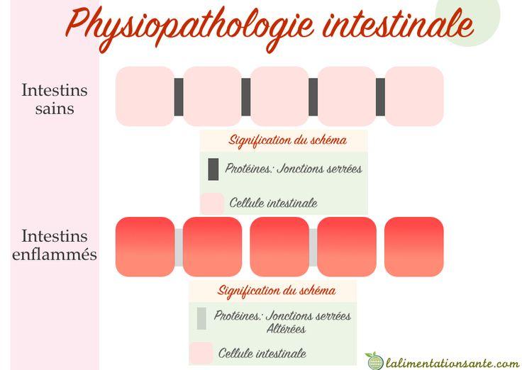 physiopathologie intestinales