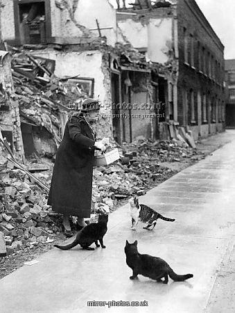 Mrs. Caroline Roberts of 22 Lindfield street, Poplar, London seen here in November 1940 feeding cats made homeless by the Nazi bombing raids