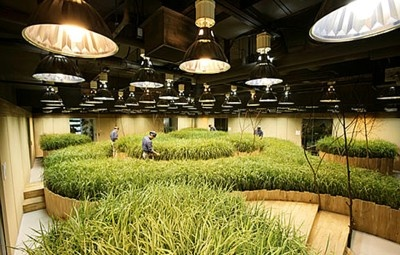 """This looks like something we might see in a movie about futuristic space travel (like the film Sunshine), but is actually a real present-day subterranean farm underneath a bank building in Tokyo. The project, with the cool sci-fi sounding name """"Pasona O2,"""" covers an area of 1,000 square meters (about 10,764 square feet). Created as a facility for teaching urban kids about agriculture, the farm grows rice as well as tomatoes, lettuce, strawberries, and other fruits and vegetables. If I worked…"""