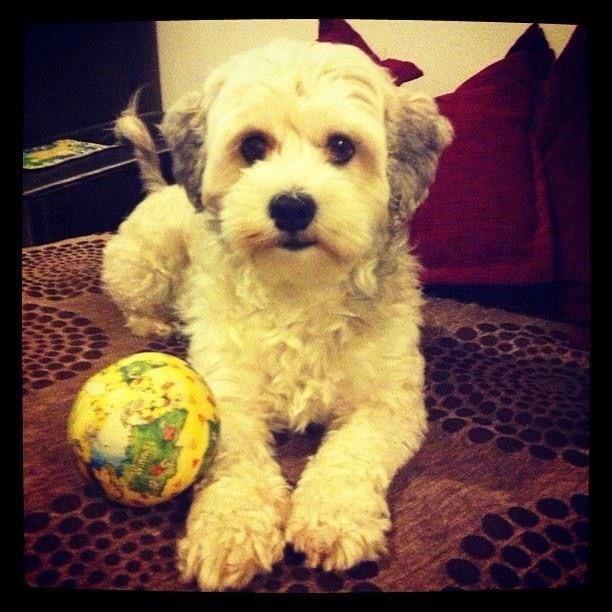 Penny dog ..