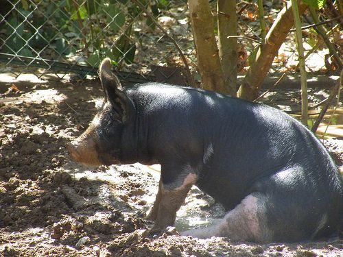 Hog and Dogs Ranch - Herald, CA