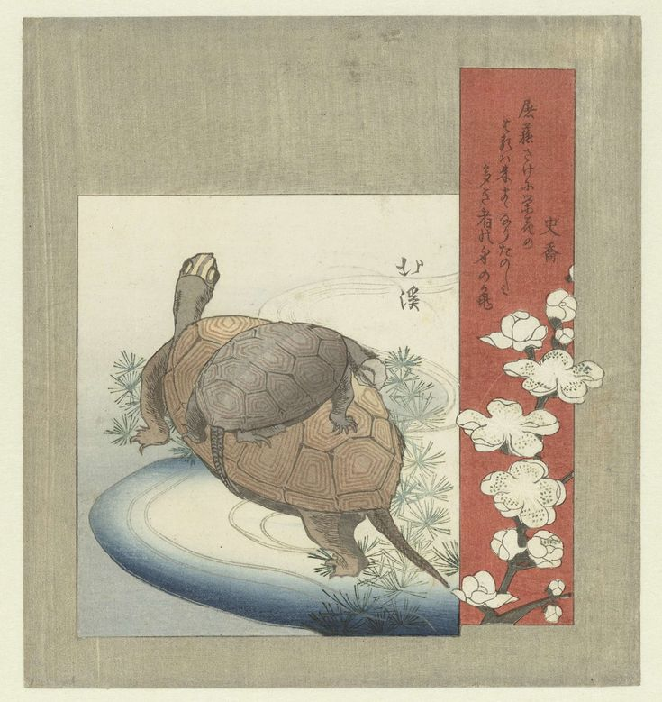 Totoya Hokkei   Schildpadden, Totoya Hokkei, Shikyô, c. 1826   Een schildpad met een kleinere schildpad op zijn rug, met in het rode cartouche pruimenbloesem. Met één gedicht.