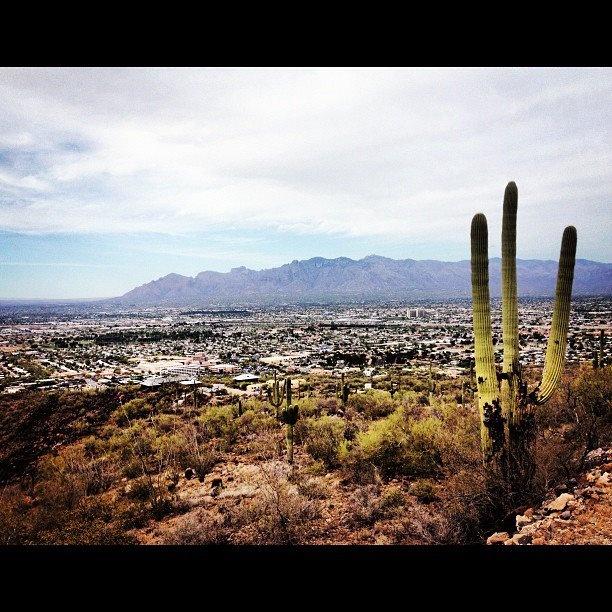 On top of Tumamoc Hill-Tucson, AZ: Tumamoc Hilltucson