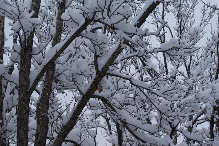 snow on tree branch Photo - Visual Hunt