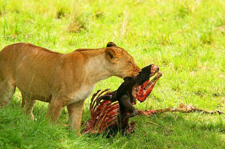 Hvor meget dyr og mennesker har dræbt gennem tiden, handler i høj grad om overlevelse.