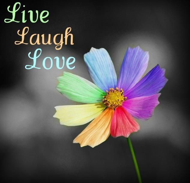 Pin By Bobbi Faber On Live Laugh Love Live Laugh Love Courtyard Plants Chrysanthemum Flower Seeds