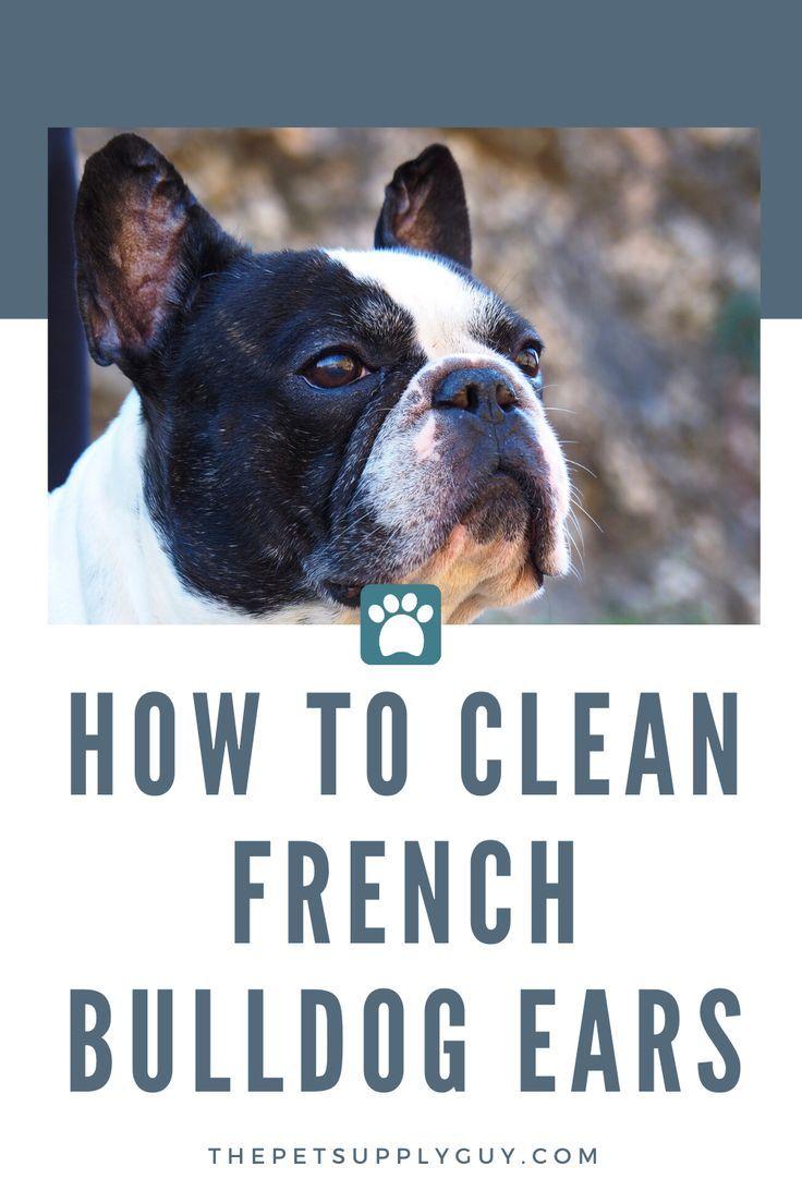 Best Ear Cleaner For A French Bulldog French Bulldog Ear