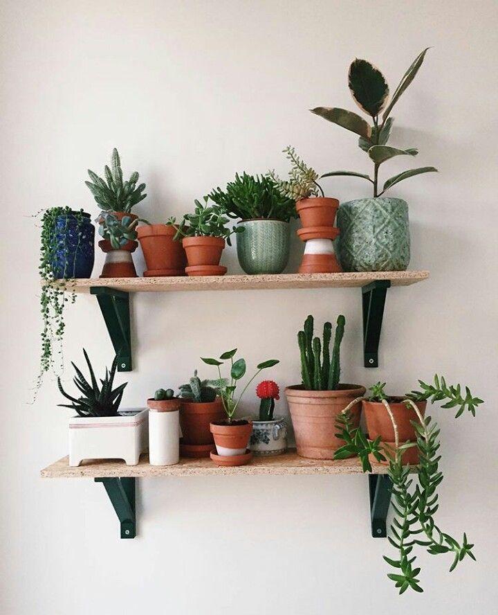 Plants on shelf