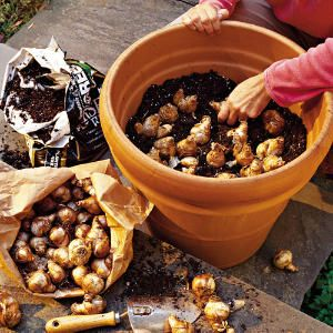 Plant bulbs in pots - daffodils do especially well. Learn more from Southern Living.