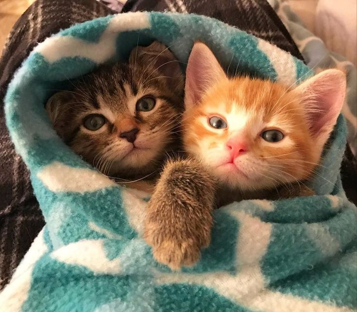 Ginger Kitten Found Love In Another Rescue Kitty and Wouldn't Let Him Go. - Love Meow