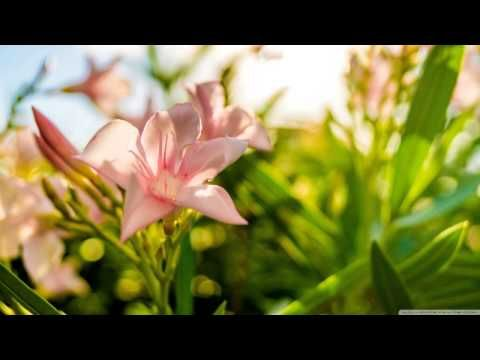 Morning Music for Positive Energy - Music for Positive Energy and Healing 3 - YouTube